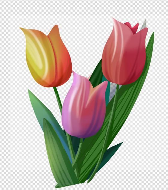 手绘郁金香花束